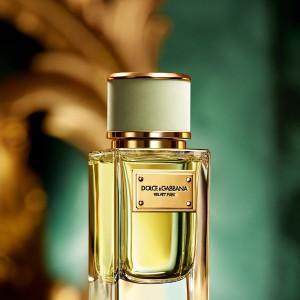 Dolce & Gabbana, Velvet Cypress