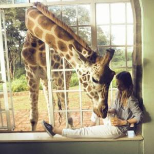 10 hoteli, w których zwierzęta żyją na wolności