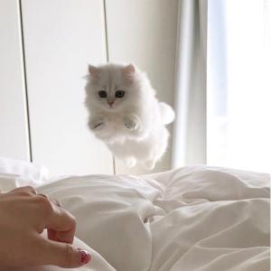 Kot Biały