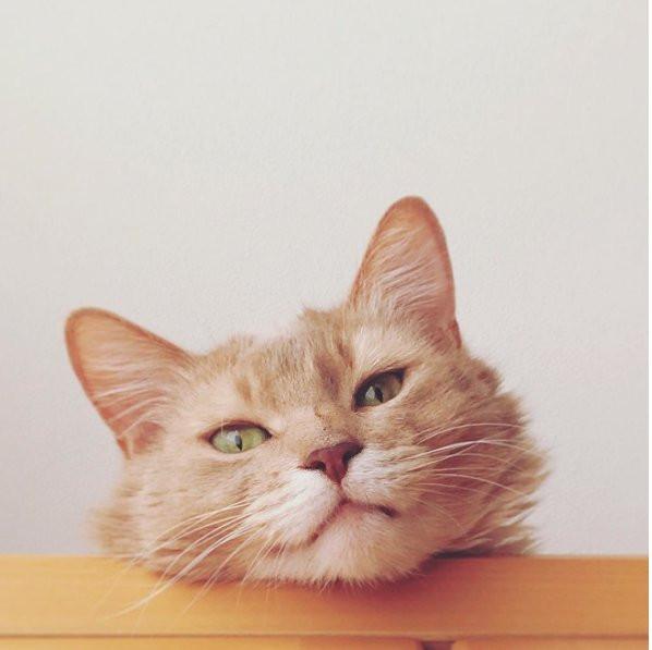 światowy Dzień Kota Oto Wszystkie Rasy Kotów Glamourpl